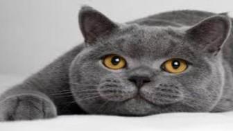 Kedi Sahibi Nasıl Olabilirsiniz? Kedi Sahiplendirme Nasıl Yapılır?