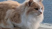 Kediniz İçin Birbirinden Güzel İsimler