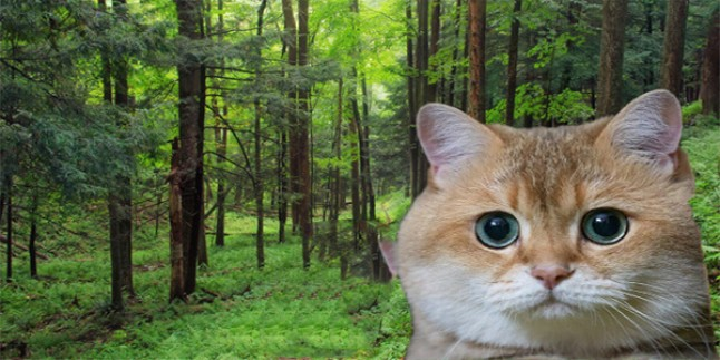 Kedi Sahiplenmek İçin Hazır Mısınız?