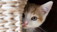 Yavru Kedi Sahiplenirken Dikkat Edilmesi Gerekenler