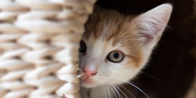 Kedi Sahiplenme: İlk Kez Kedi Sahiplenecekler İçin Bilinmesi Gerekenler