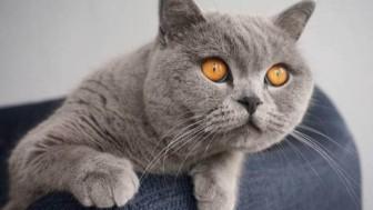 Kedilerle İlgili Sizleri Şaşırtacak 20 Bilgi