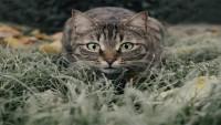 Cins Kedi Türleri ve Özellikleri