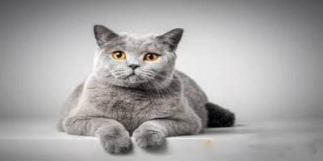 Kedi Sahiplenme İçin Kendinizi Hazır Hissediyor musunuz?