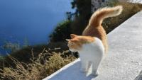 Cins Kedi Mi Almalıyım Yoksa Sokak Kedisi Mi?