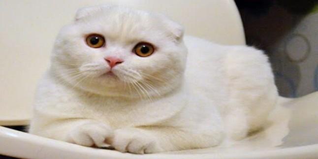 Kedimi Nasıl Sahiplenmeliyim?
