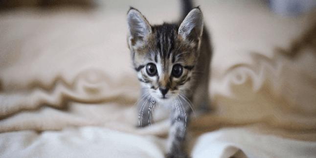 Yavru Kedi Sahiplenme: Yavru Kedinizin Evinizde ilk Günü
