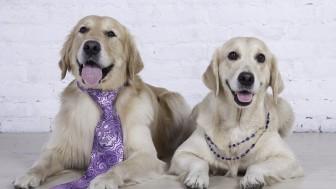 Köpeklerde Cinsiyet: Dişi Köpek – Erkek Köpek Sahiplenmenin Ayrıcalıkları