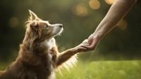 Yetişkin Köpek Sahiplenmek Faydaları Nelerdir
