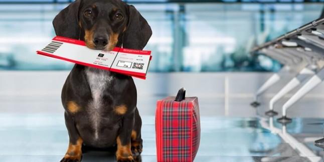 İlk Kez Sahiplenenler İçin Evcil Hayvanlarda Mikroçip ve Pasaportun Önemi