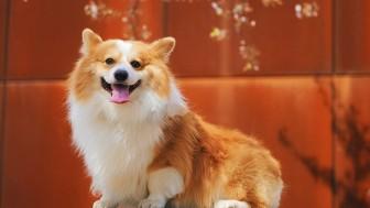 Hangi Köpek Cinsini Sahiplenmeliyim: Köpek Sahiplenme Tavsiyeleri