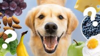 Köpeklerin Yiyebileceği Meyveler