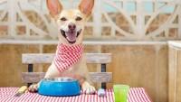 Köpek Sahibi Olanların Atlamaması Gereken Kurallar