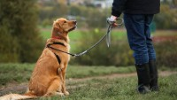 Köpek Sahiplenme Öncesi Bilinmesi Gerekenler
