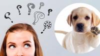 Safkan Köpek Sahiplenme Sırasında Dikkat Etmeniz Gerekenler