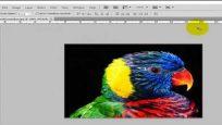 Photoshop da renkli resimleri siyah beyaz yapma