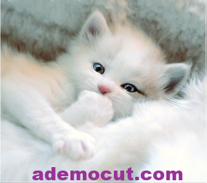 masum kedi resimleri