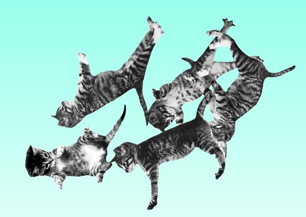 Kedi Severler için İlginç Bir Web Sitesi